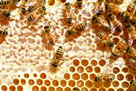 Decline in bee population raises questions